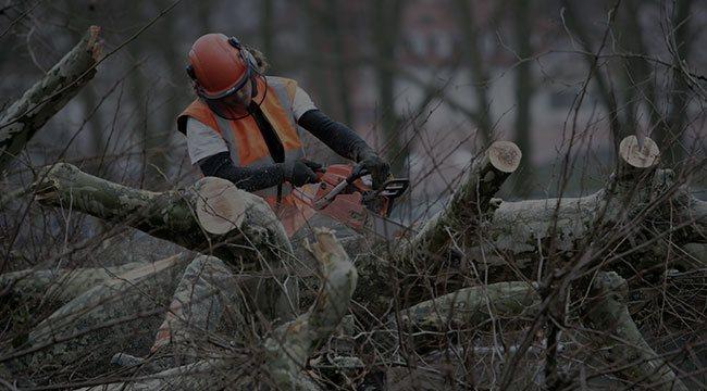 Acworth Tree Service