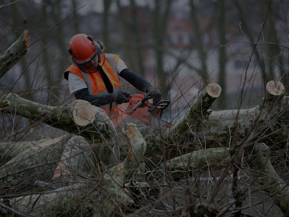 Acworth Tree Removal